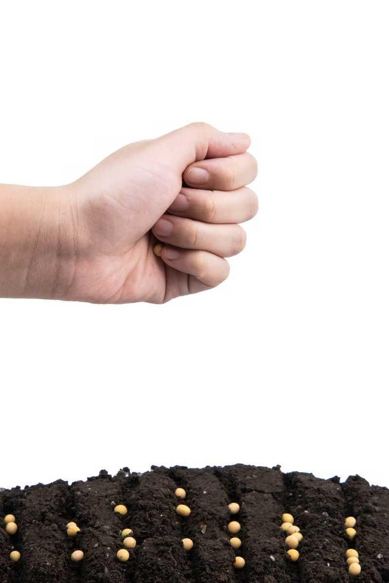 撒开黄豆种子黑土地上播种春季种植2324422png图片免抠素材