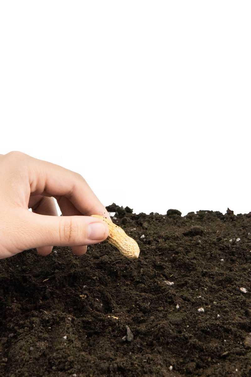 拿着花生种子黑土地上播种春季种植8988943png图片免抠素材