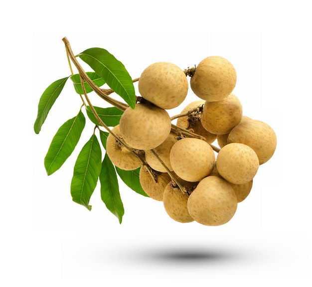 枝头上的一串龙眼美味水果5043483免抠图片素材