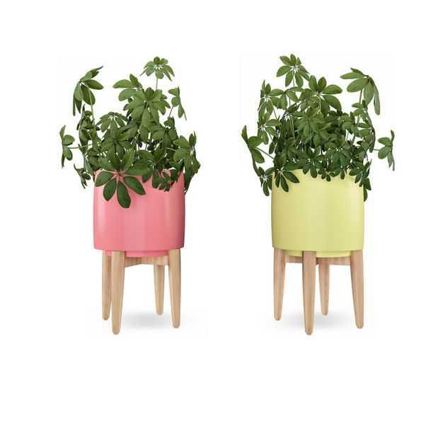 两款彩色花盆中的鹅掌柴盆栽植物观赏植物4643952免抠图片素材