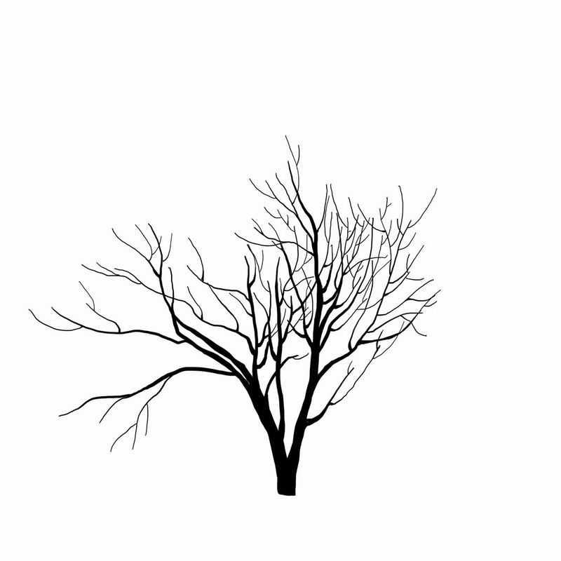 黑色的手绘风格干枯的大树3469473png图片免抠素材