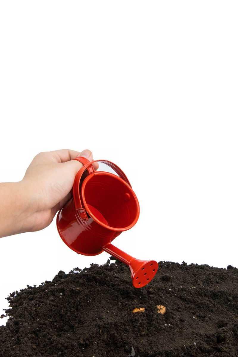 给种子浇水黑土地上播种春季种植3846527png图片免抠素材