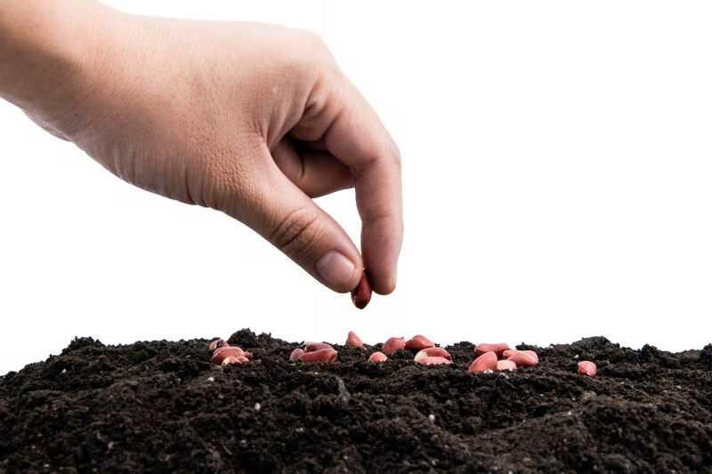 拿着花生种子插入黑土地上播种春季种植7415583png图片免抠素材