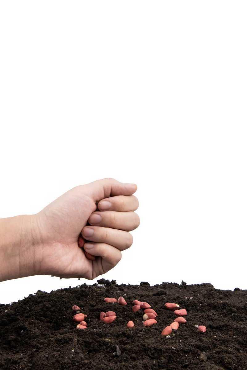 撒开花生种子黑土地上播种春季种植7853417png图片免抠素材