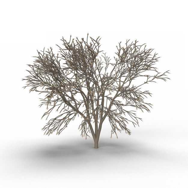 一棵干枯的大树小树树枝植物9488113免抠图片素材