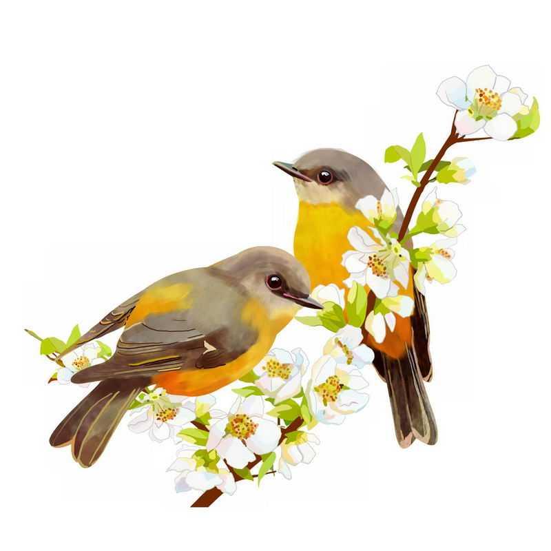 桃花枝上的两只黄鹂鸟插画3636535PSD图片免抠素材