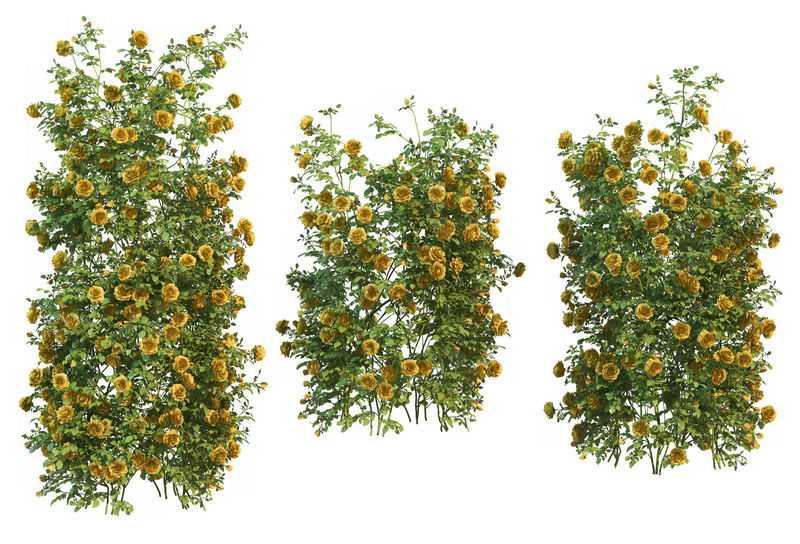 3款双荚决明常春藤观叶植物盆栽绿植观赏植物墙4429887免抠图片素材