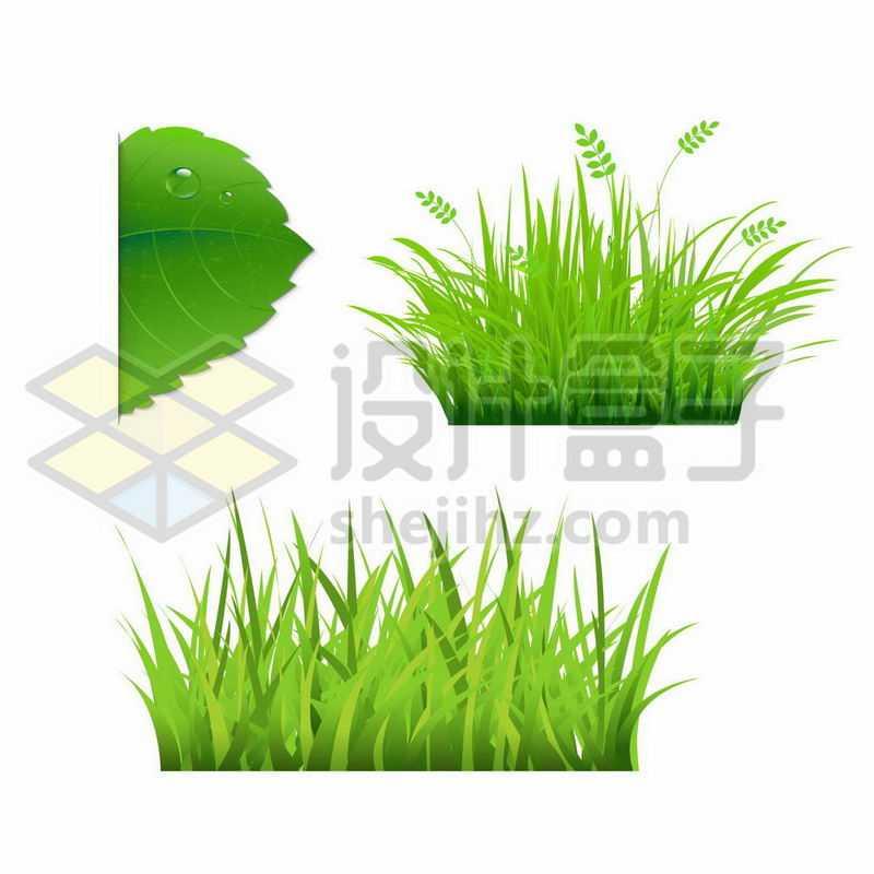 两款翠绿色的草丛2322537矢量图片免抠素材