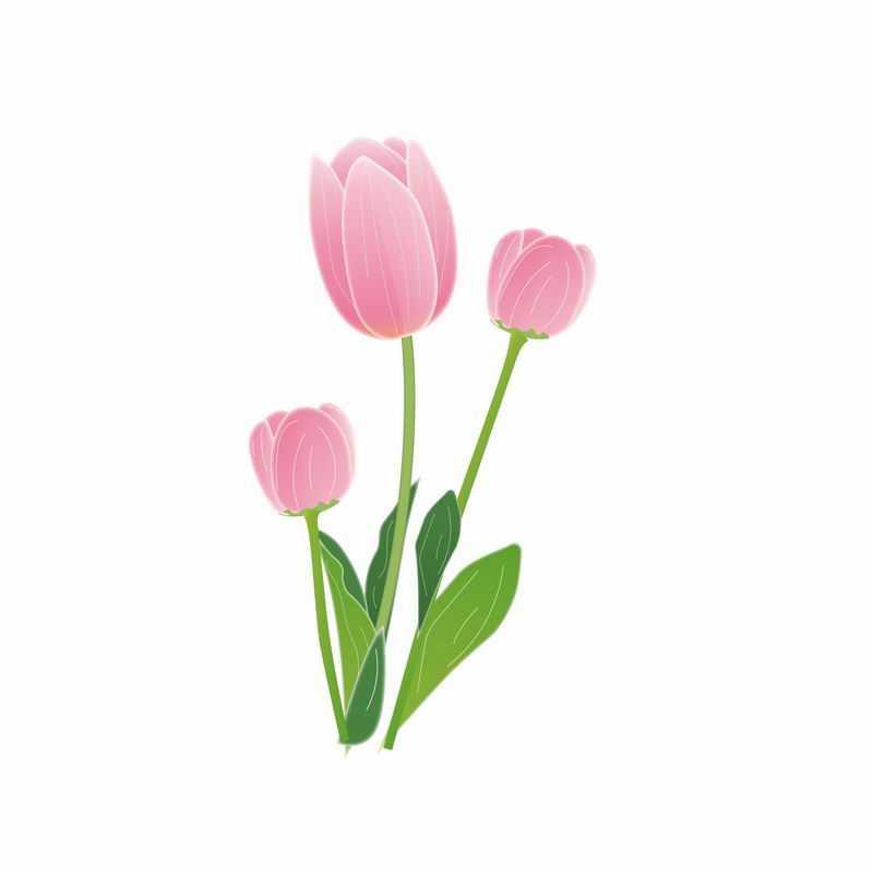郁金香粉色花朵手绘插画3484741AI矢量图片免抠素材