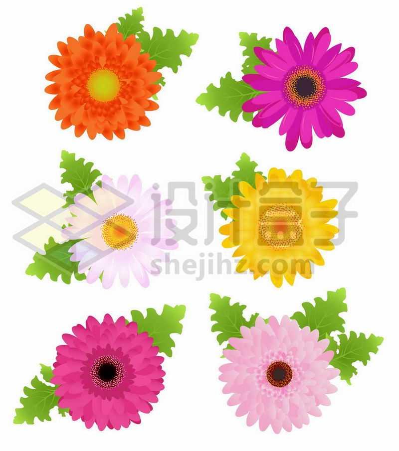 6种颜色的太阳花鲜花花朵花卉8325850矢量图片免抠素材