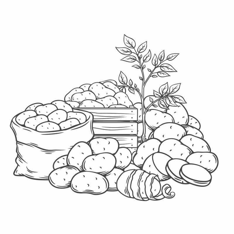 各种土豆黑白插画2895310图片免抠素材