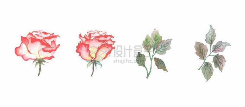 红色的花朵和绿色树叶水彩插画5580433矢量图片免抠素材