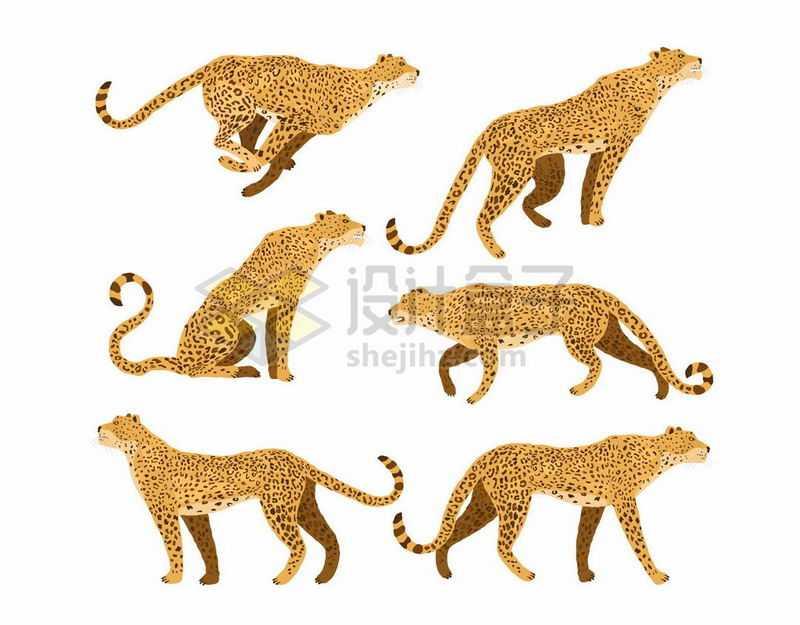 6种动作形态的猎豹野生猫科动物插画1753401矢量图片免抠素材