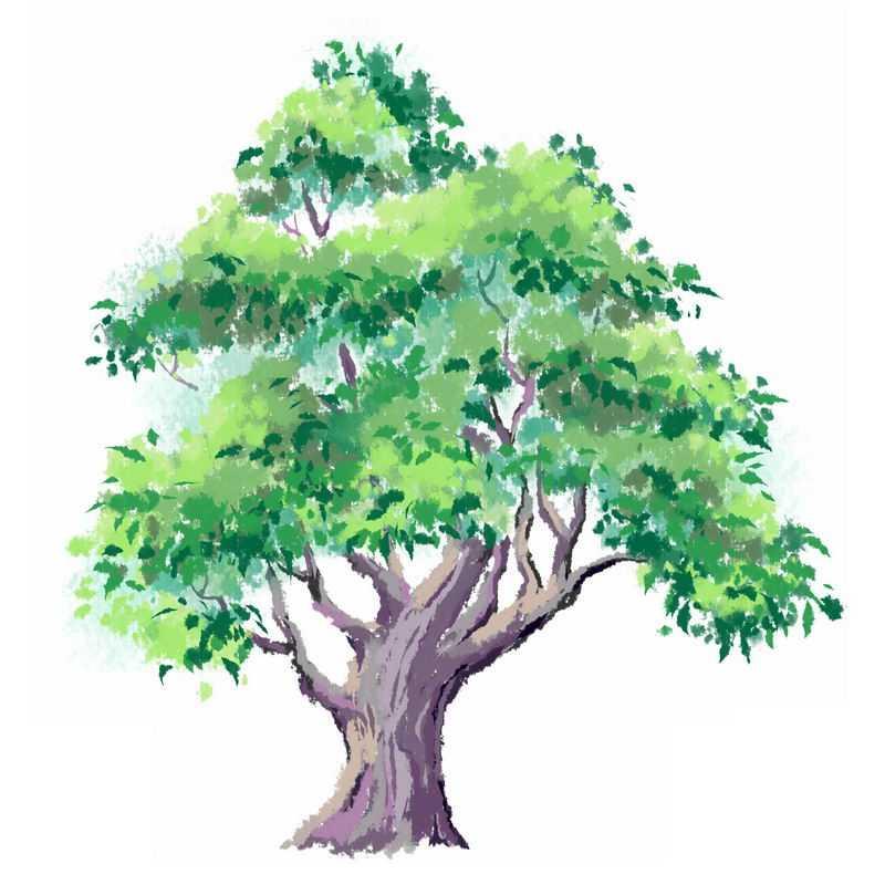 郁郁葱葱的大树手绘插画1687401免抠图片素材