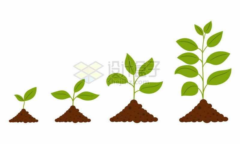 植物发芽过程图4508573矢量图片免抠素材