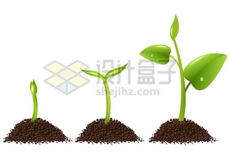 3个发芽的嫩芽6899959矢量图片免抠素材