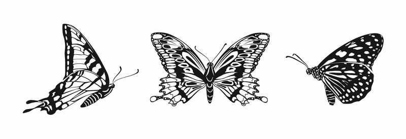 3款黑白色蝴蝶4166256图片免抠素材