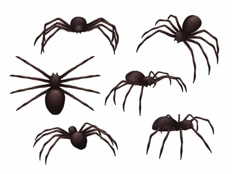 6个不同视角的大蜘蛛7898405图片免抠素材