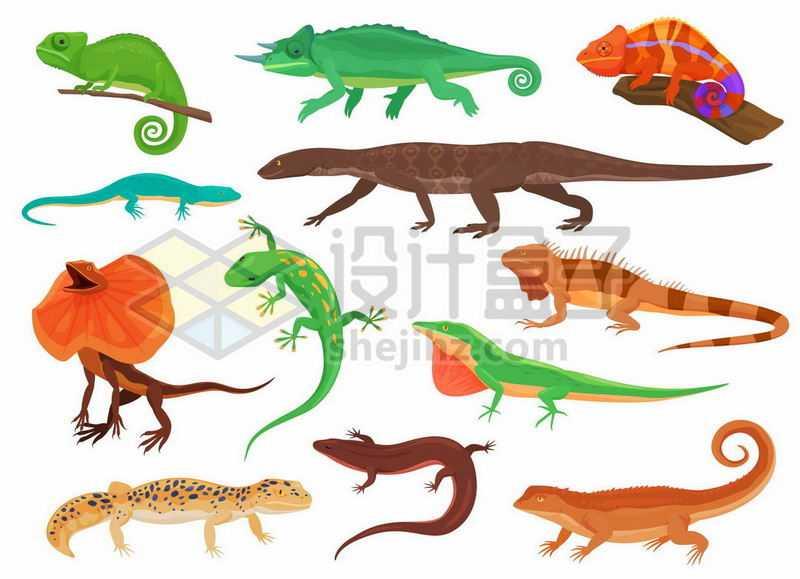 变色龙避役伞蜥壁虎守宫石龙子各种蜥蜴爬行动物8702863矢量图片免抠素材