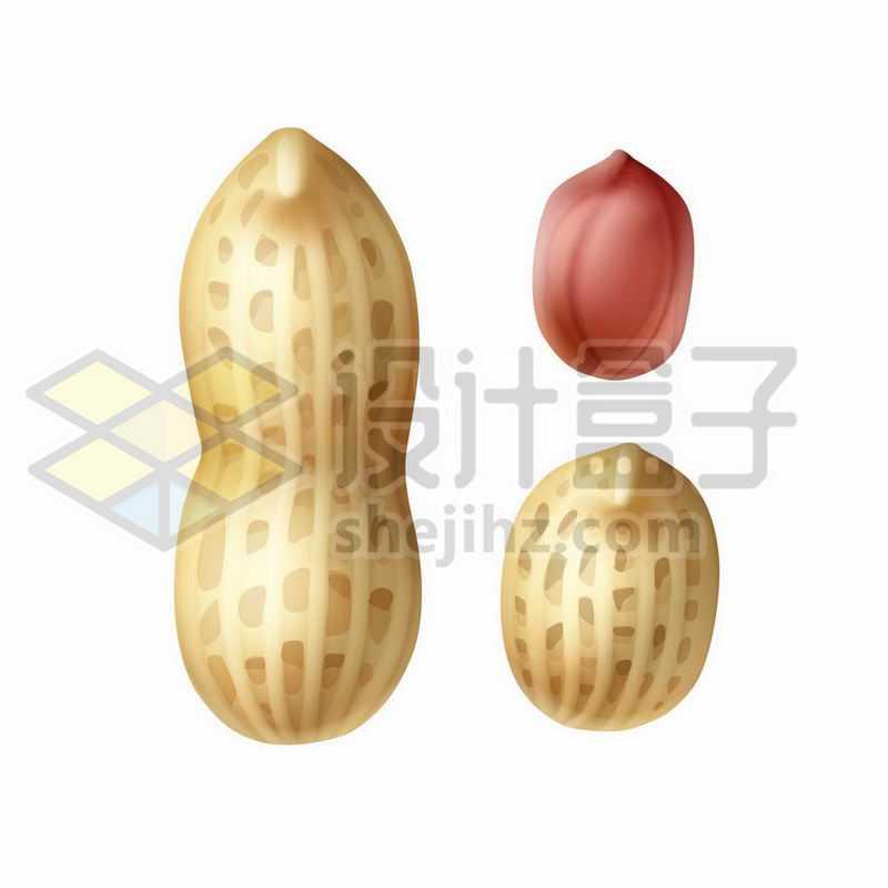 花生壳和花生米美味零食9783151矢量图片免抠素材