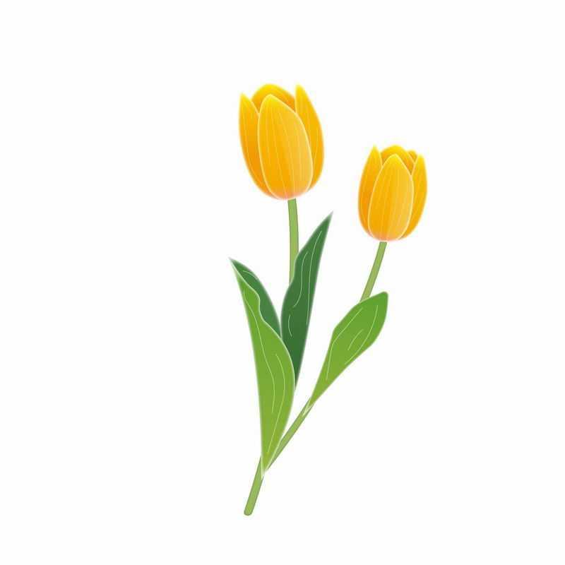 郁金香黄色花朵手绘插画3534459AI矢量图片免抠素材