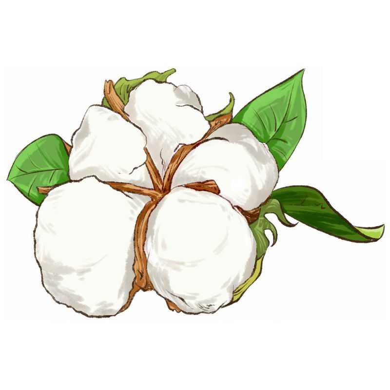 手绘风格的新疆棉花4108497免抠图片素材