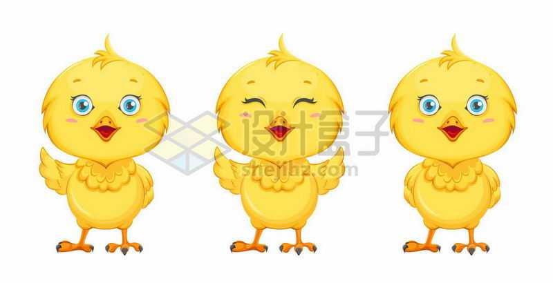 3款可爱的卡通小黄鸡小鸡4212724矢量图片免抠素材