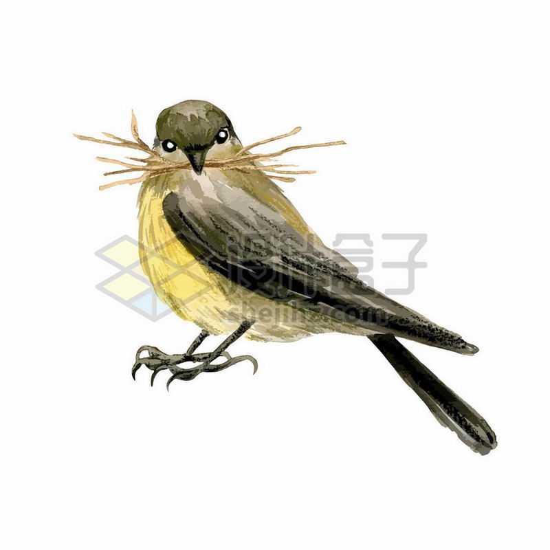 黄鹂鸟麻雀叼着树枝建鸟巢2396839矢量图片免抠素材