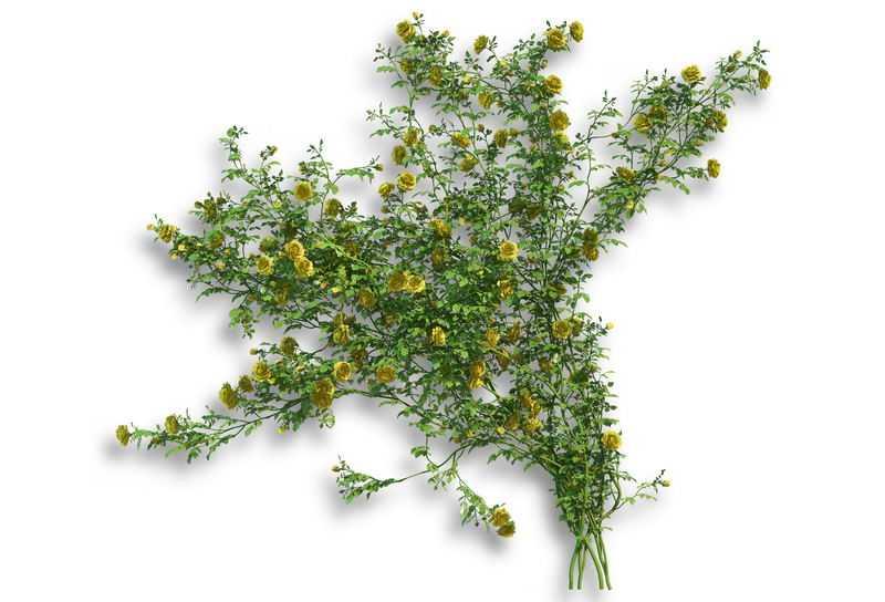 花苜蓿常春藤观叶植物盆栽绿植观赏植物墙8520991免抠图片素材