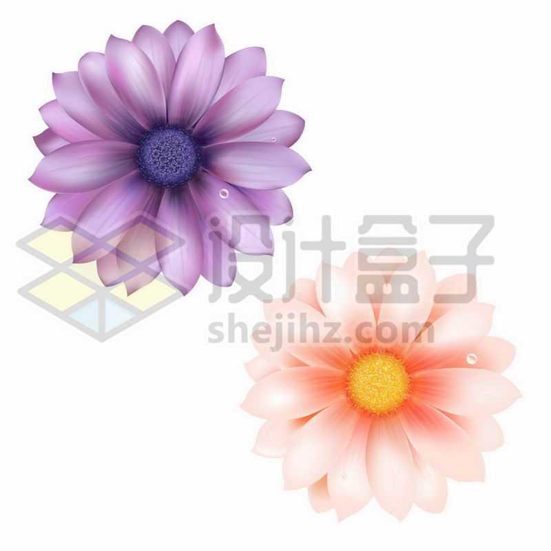 紫色和红色菊花鲜花花朵花卉3903407矢量图片免抠素材