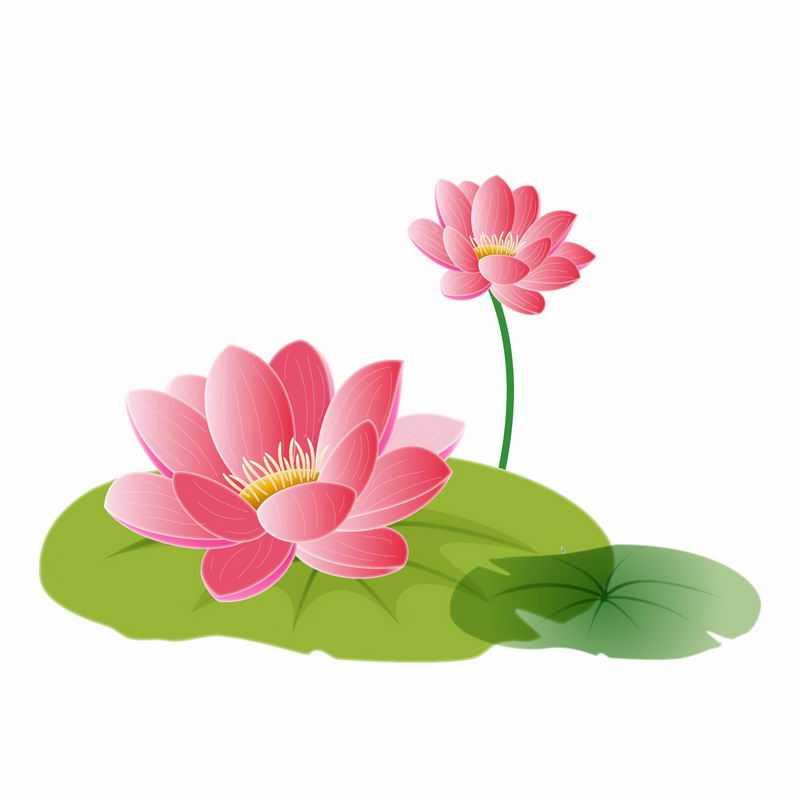盛开的荷花莲花和荷叶莲叶手绘插画5754245AI矢量图片免抠素材