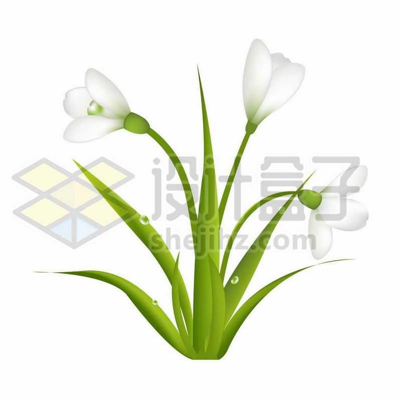 郁金香白色花朵鲜花4539764矢量图片免抠素材