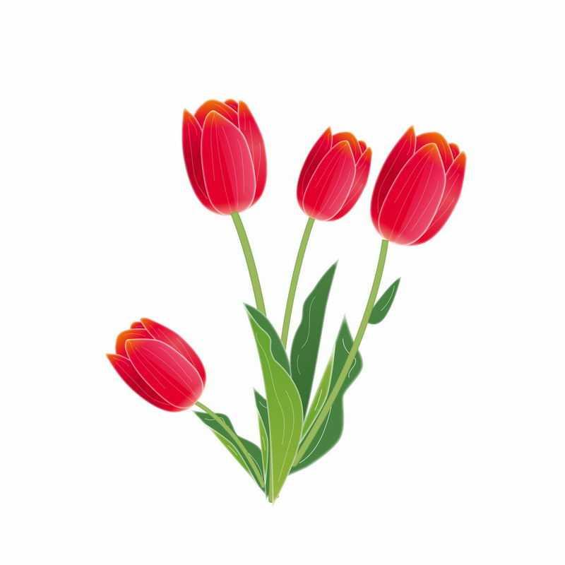 郁金香红色花朵手绘插画7883254AI矢量图片免抠素材