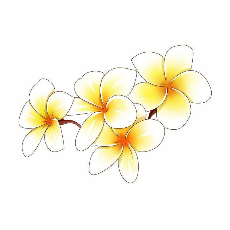 盛开的鸡蛋花白色花朵7439821免抠图片素材