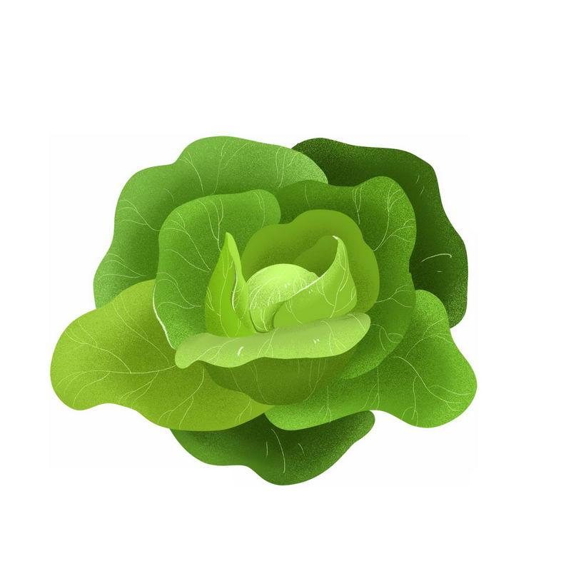 一颗包菜甘蓝椰菜卷心菜美味蔬菜3547951免抠图片素材 生活素材-第1张
