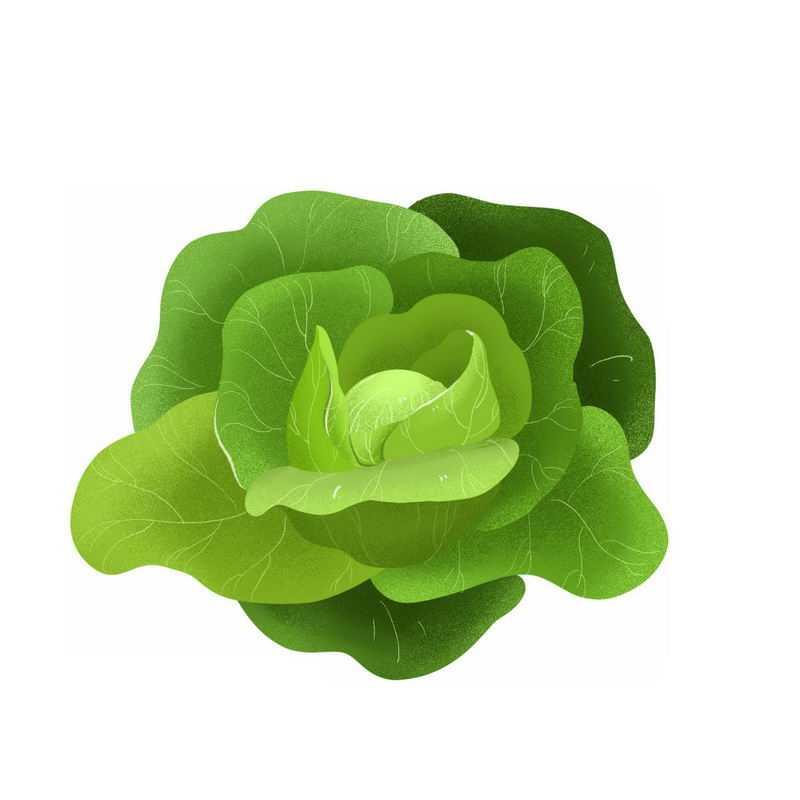一颗包菜甘蓝椰菜卷心菜美味蔬菜3547951免抠图片素材