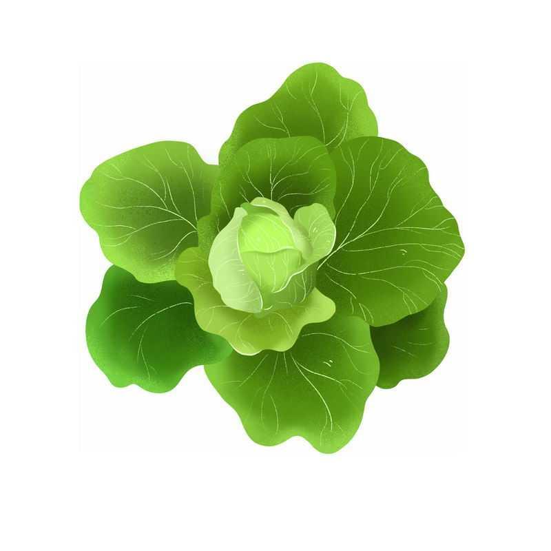 一颗包菜甘蓝椰菜卷心菜美味蔬菜9206970免抠图片素材