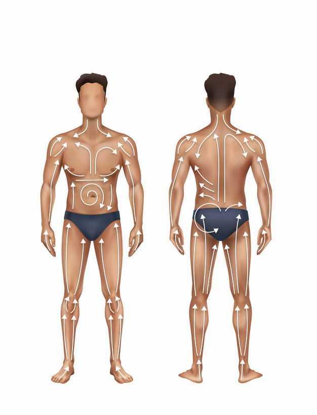 人体体液循环系统人体模型正反面9407235矢量图片免抠素材