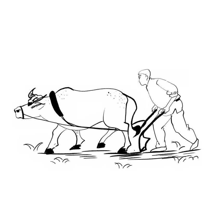 农民驾驭耕牛正在耕田犁地手绘插画风格5808671免抠图片素材