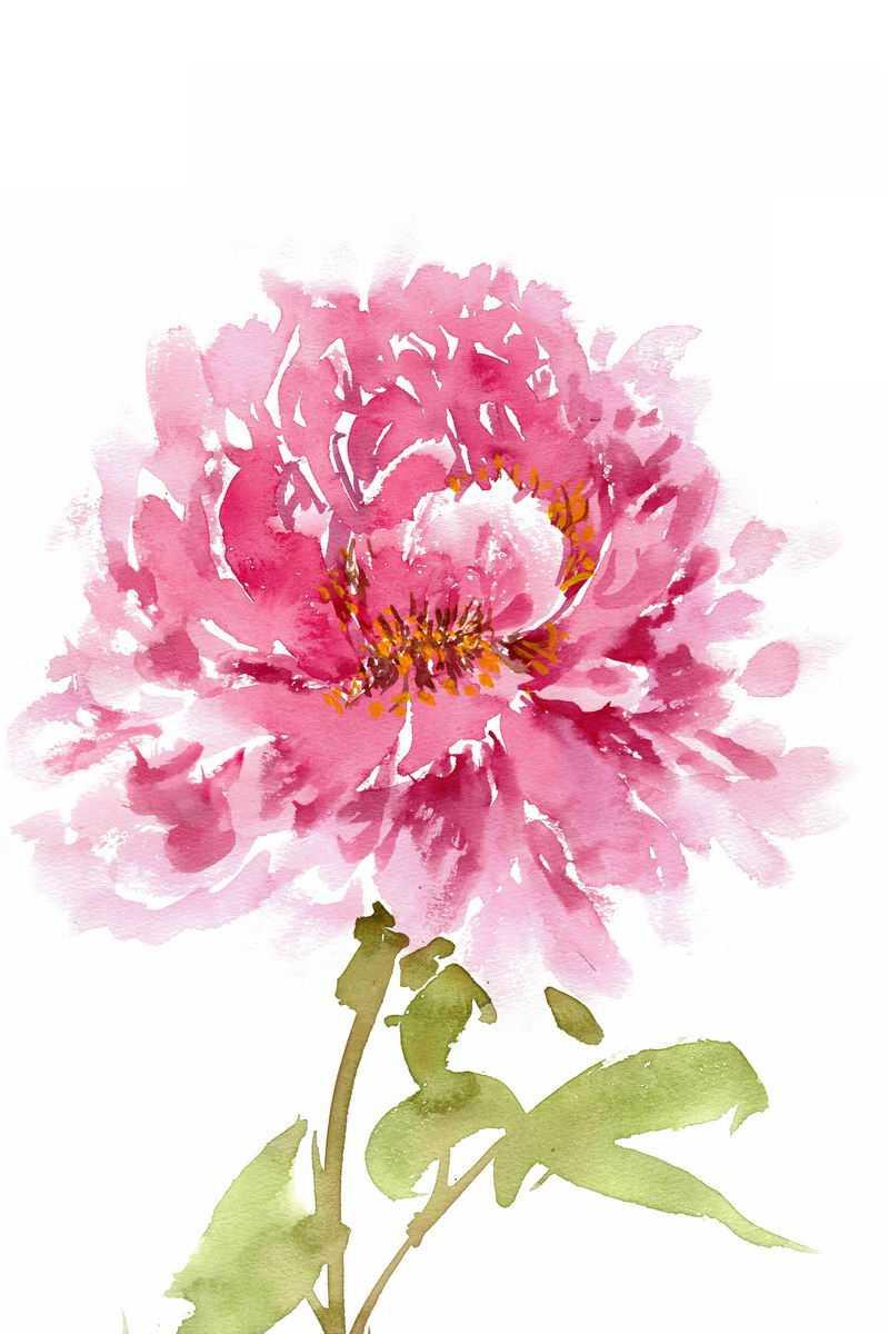 水彩画风格盛开的牡丹花美丽花朵3869832图片素材