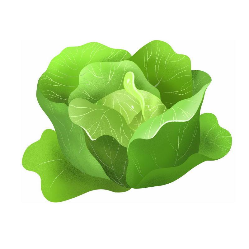 一颗包菜甘蓝椰菜卷心菜美味蔬菜9730113免抠图片素材 生活素材-第1张