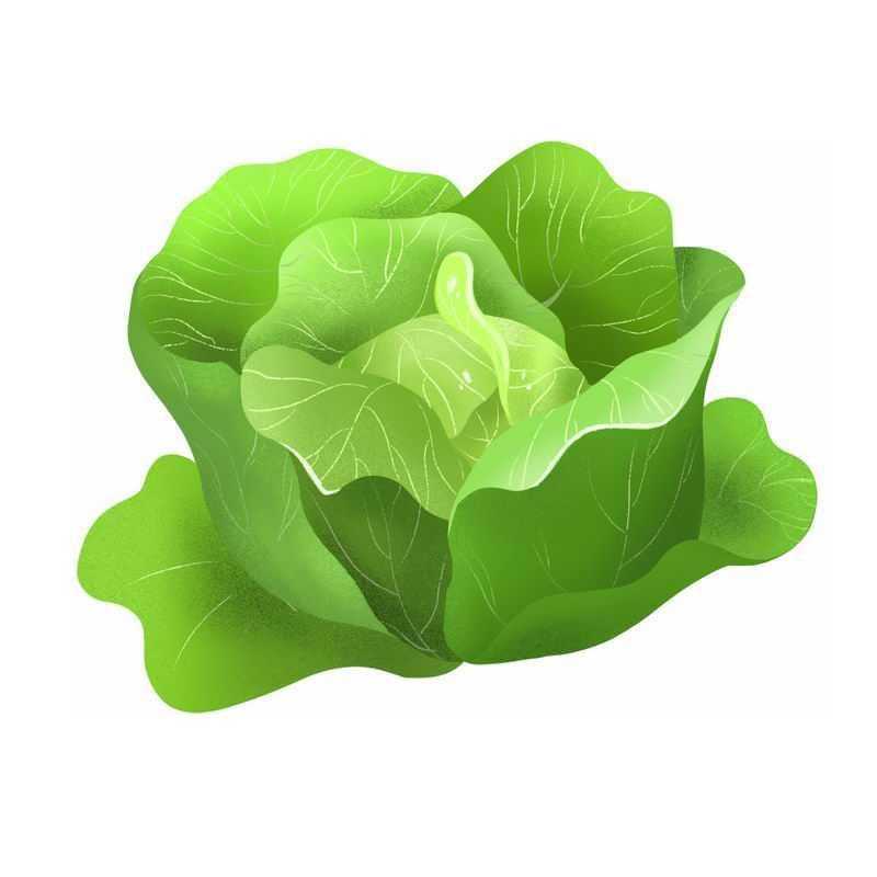 一颗包菜甘蓝椰菜卷心菜美味蔬菜9730113免抠图片素材