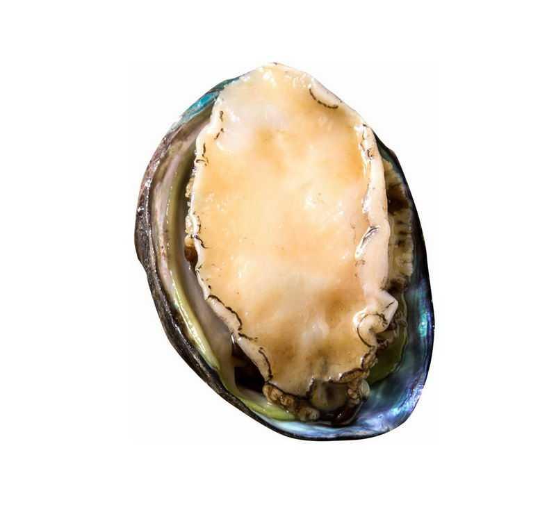 一个鲍鱼海鲜美味美食9570978png图片免抠素材