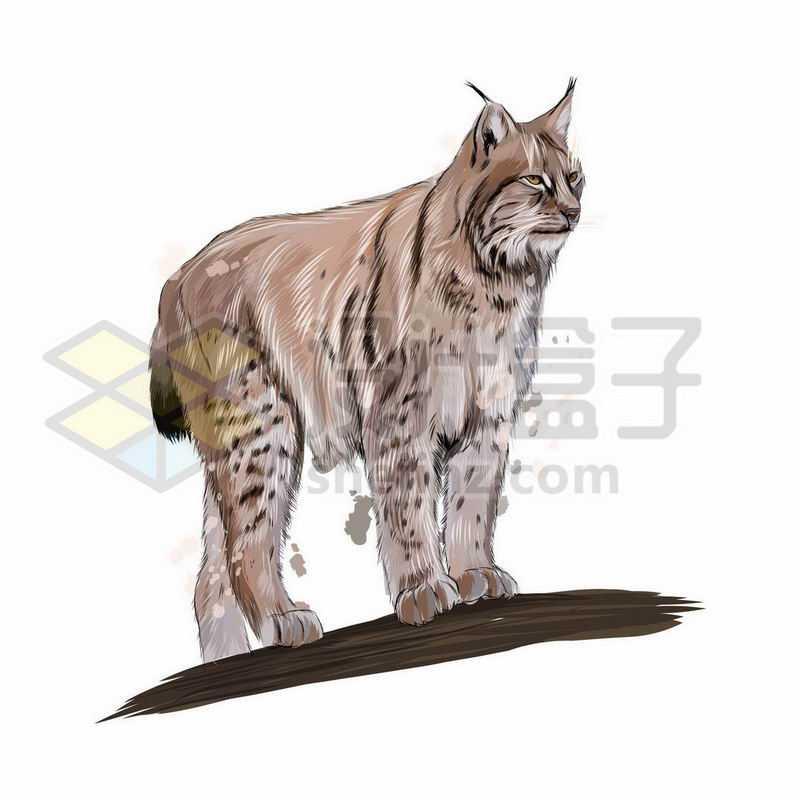 猞猁山猫之野生动物手绘插画4803961矢量图片免抠素材