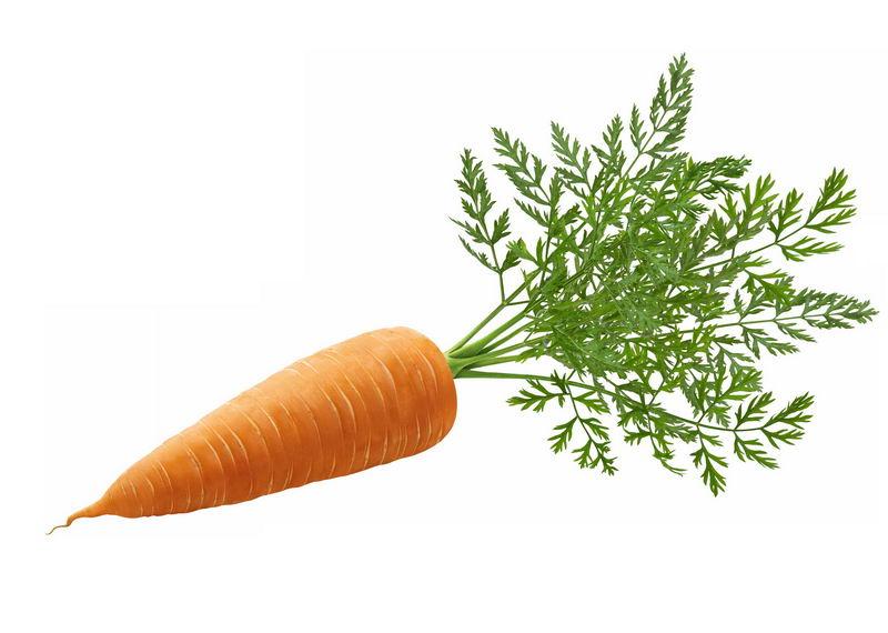 一根带叶子的胡萝卜美味蔬菜2475134免抠图片素材 生活素材-第1张