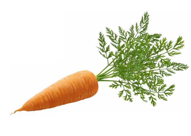 一根带叶子的胡萝卜美味蔬菜2475134免抠图片素材