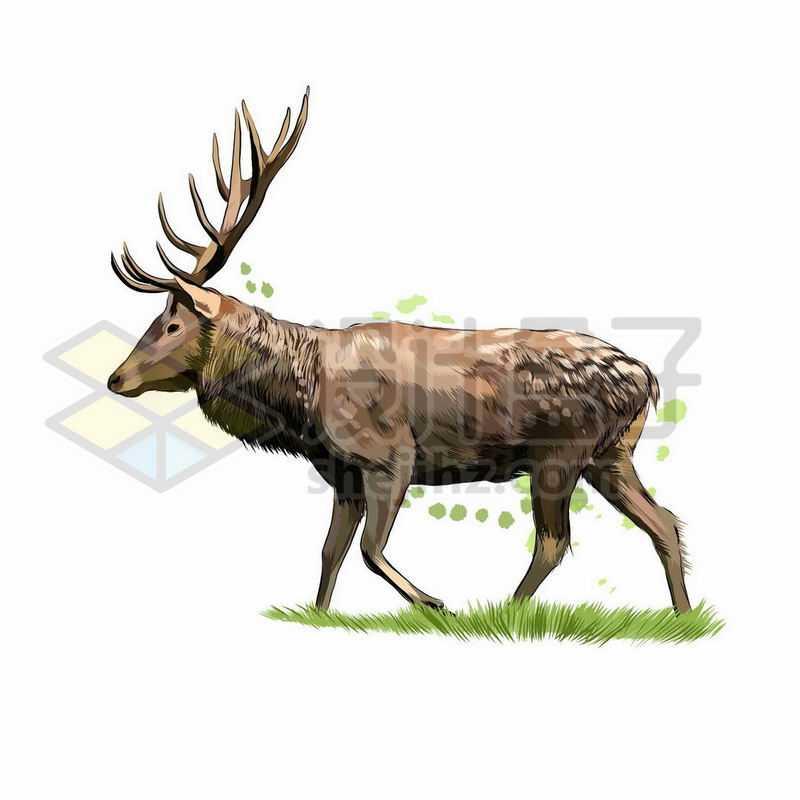 驯鹿之野生动物手绘插画7662215矢量图片免抠素材