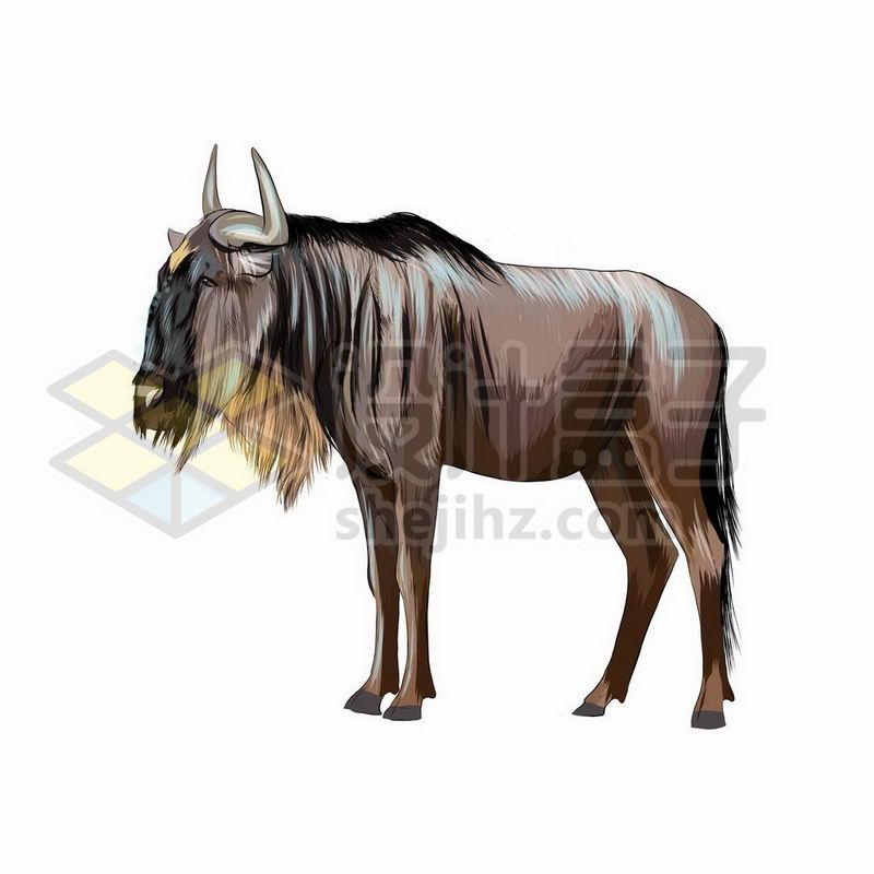 角马之非洲野生动物手绘插画5391949矢量图片免抠素材 生物自然-第1张