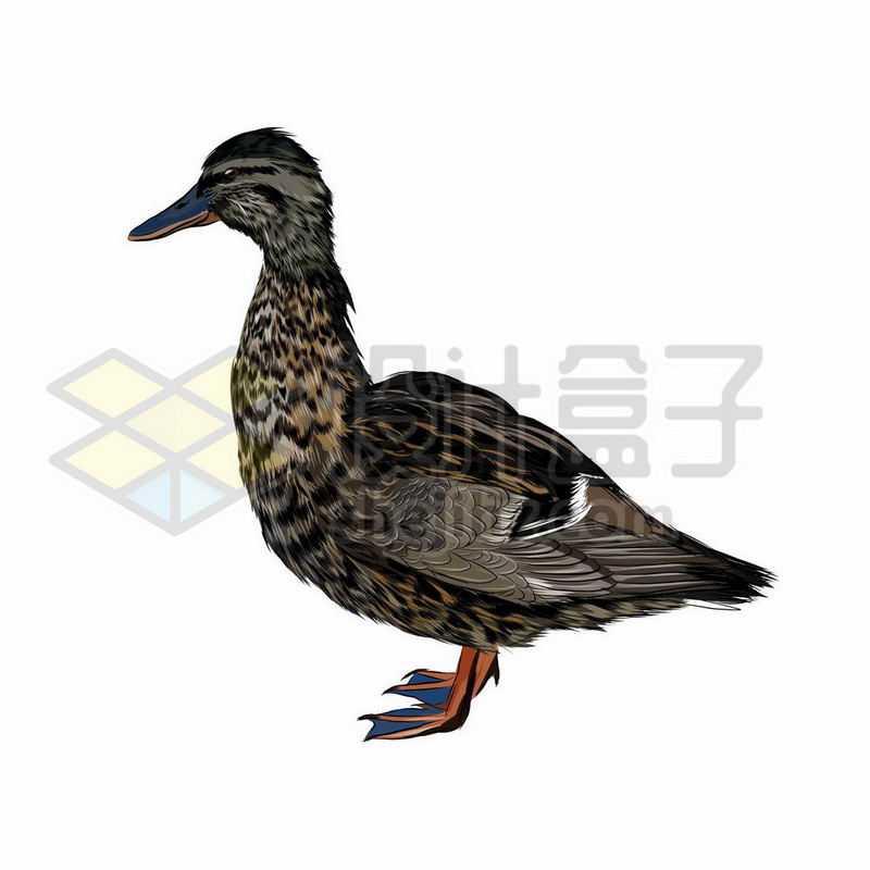 野鸭之野生动物手绘插画4970523矢量图片免抠素材