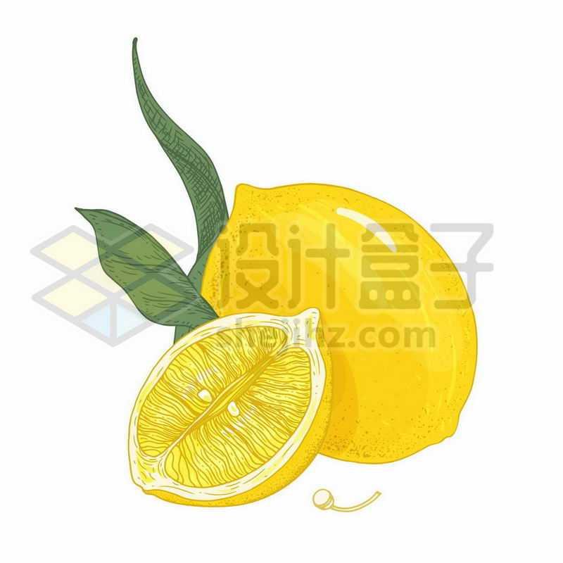切开的柠檬美味水果手绘插画3318925矢量图片免抠素材